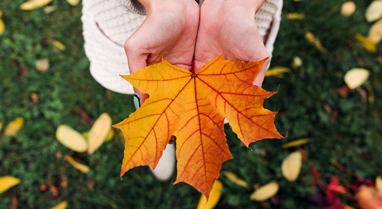 5 Reasons to Sell This Fall   Simplifying The Market